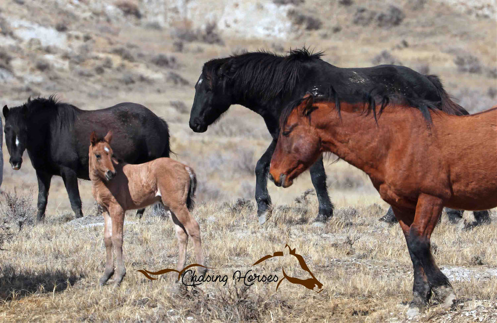 Stallion Copper and 2019 Filly Agasii 8x10 print