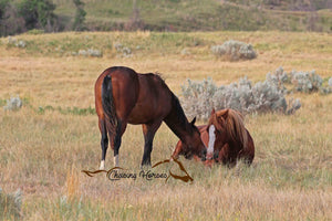 Stallion Flax and 2019 Filly Amargo 2 Print
