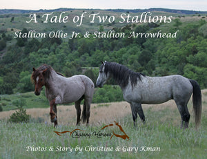 A Tale of Two Stallions