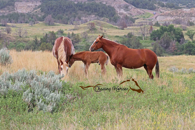 Mares Dolly & Mischief with Colt Bokel Print