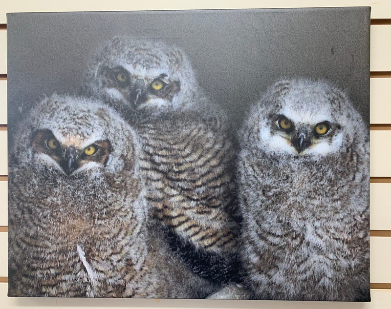 Local Artist Albert Myran Jr. 16x20  Trio of Owlettes