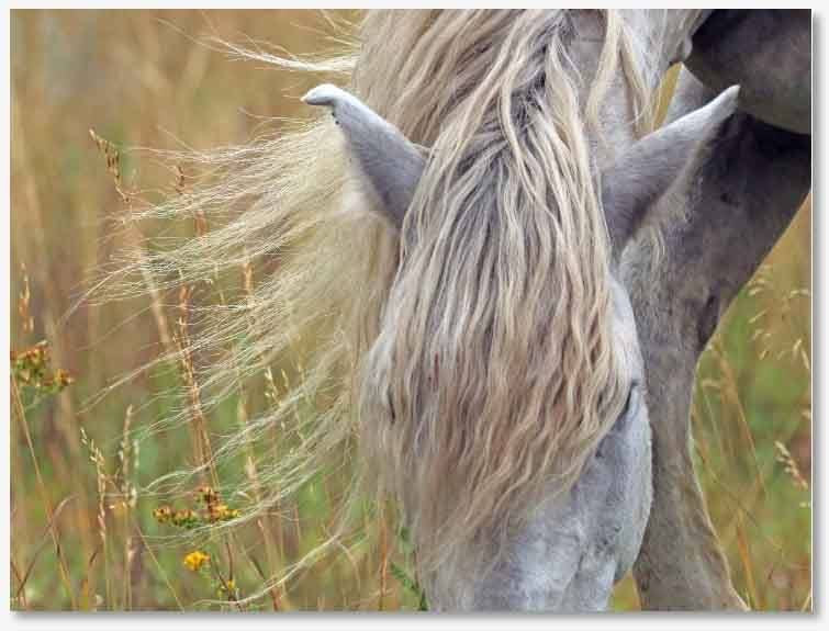Stallion Gray Ghost Print