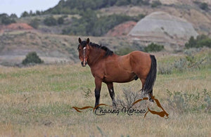 Stallion Copper 9 Print