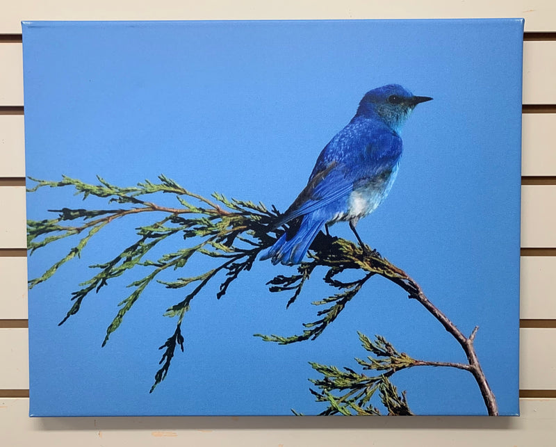 Local Artist Albert Myran Jr. 16x20  Mountain Blue Bird