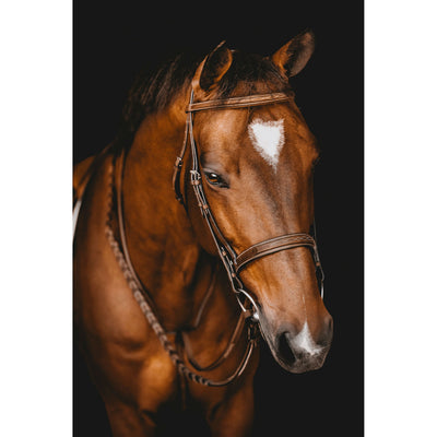 Arion Raised Fancy Stitched Wide Noseband Hunter Bridle on Horse