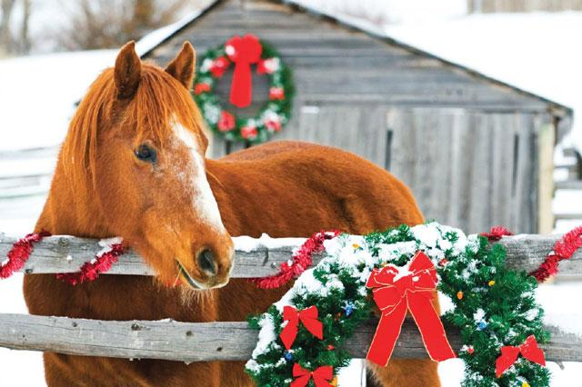 The Horse Connection Holiday Gift Certificate