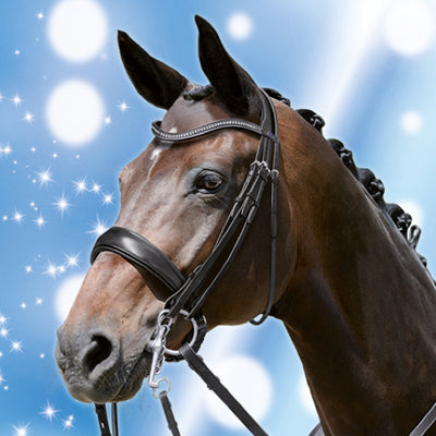 PassierBLU Dream Dressage Double Bridle on Horse