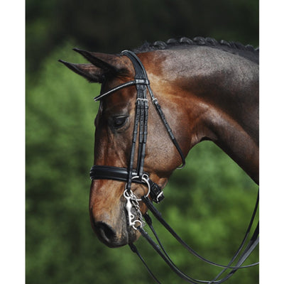 Passier Fortuna Dressage Double Bridle on Horse