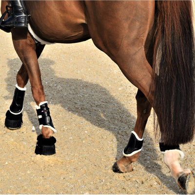 Walsh Sport Front and Ankle Tendon Boots While Riding