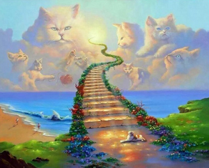 Cats Way to Heaven Full Square Diamond Painting