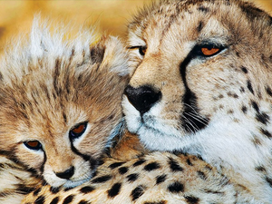 Mother & Baby Leopard Full Square Diamond Painting