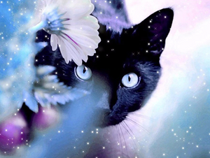 Flower Black Cat Full Square Diamond Painting