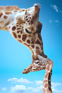 Giraffe Kiss 5D Diamond Painting