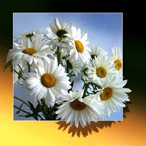 Daisy Full Square Diamond Painting