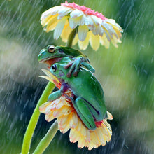 Rain & Frogs 3D Diamond Painting