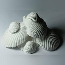Wonder Shell Small 3pk