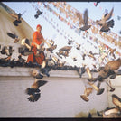 Chagdud Rinpoche with Birds Photo