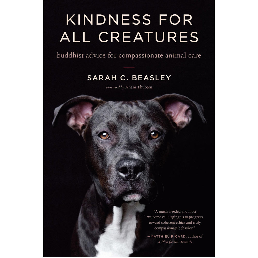 Kindness for All Creatures