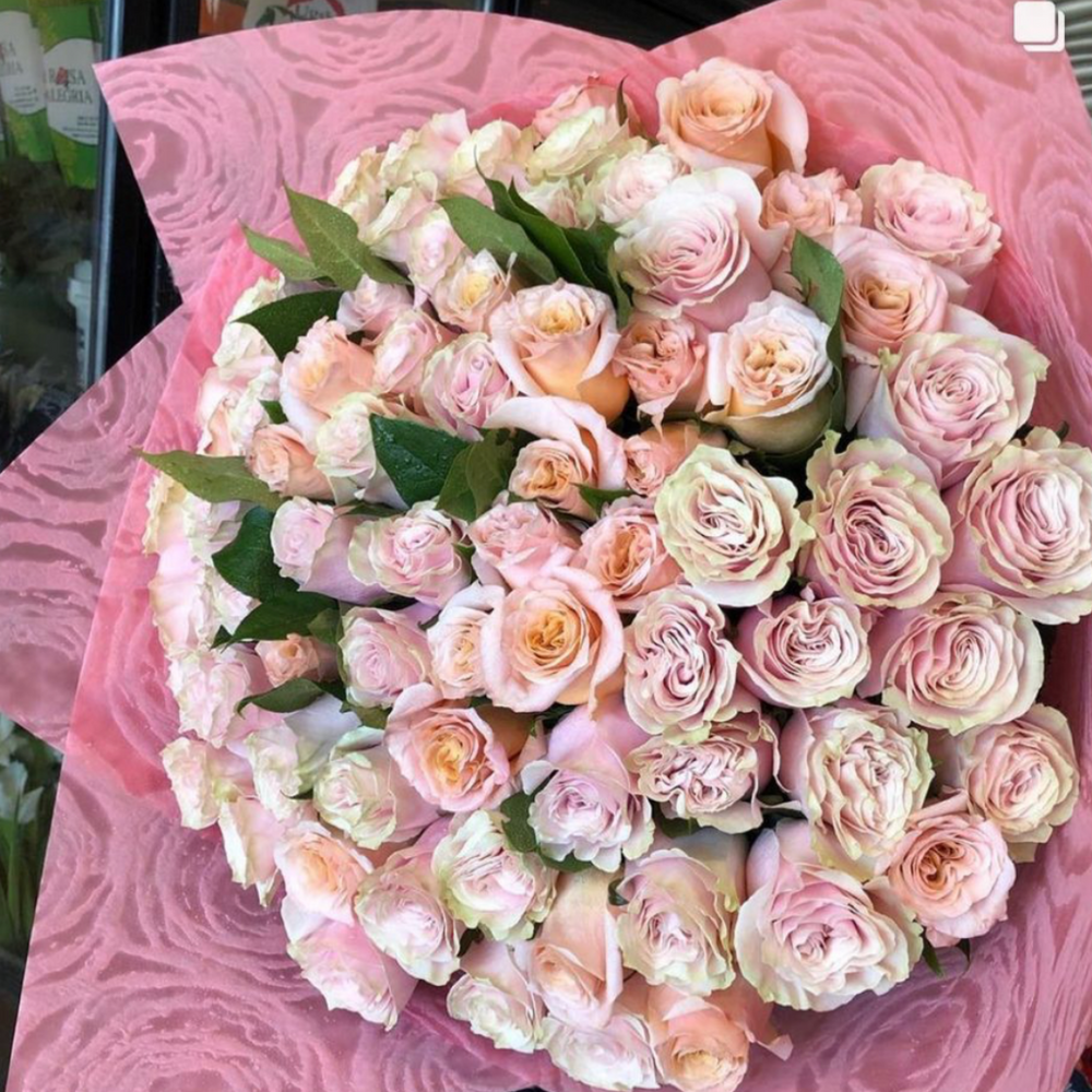 50 Light Pink Roses