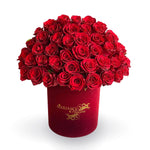 Red Rose Classic in Burgundy Velvet box