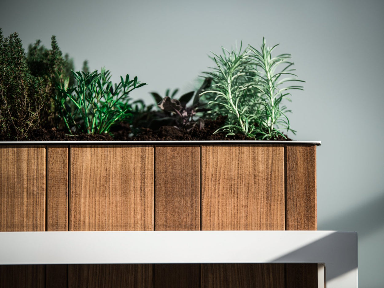 Planter Afrormosia