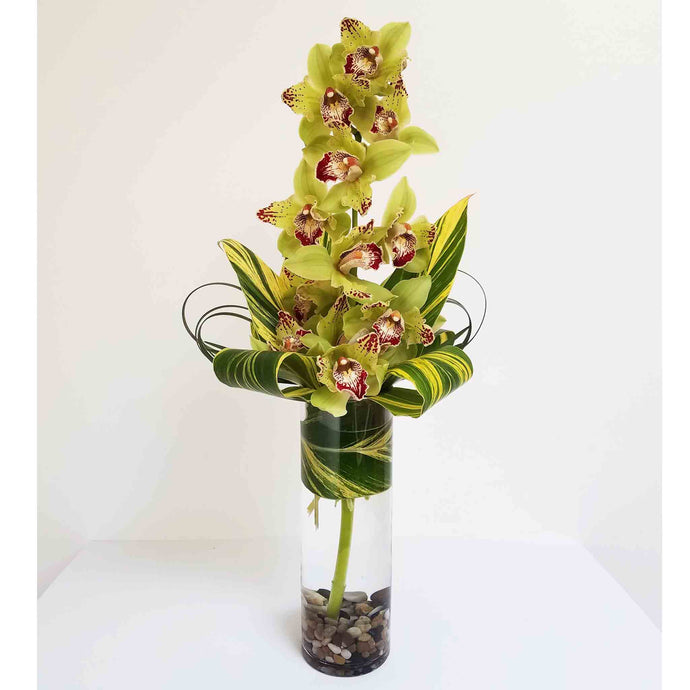 Cymbidium Orchid Arrangement