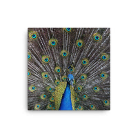 EXCLUSIVE Peacock Canvas Print - Ellie J Shoppe