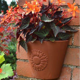 Terracotta Sunflower Wall Pot