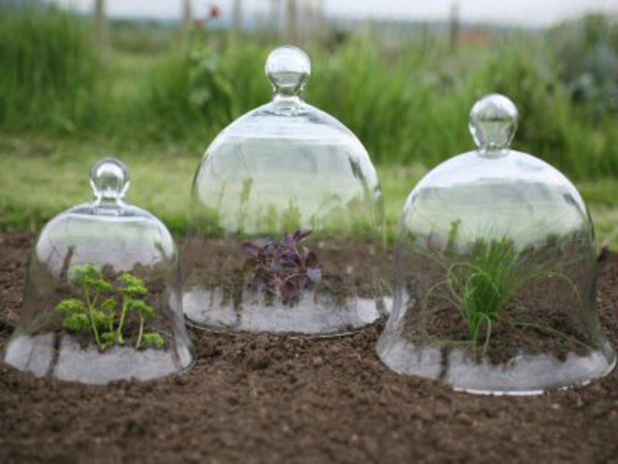 Victorian Glass Bell Jar Cloches - set of 3 - Garden Shop Online UK Online Garden Centre  - 1