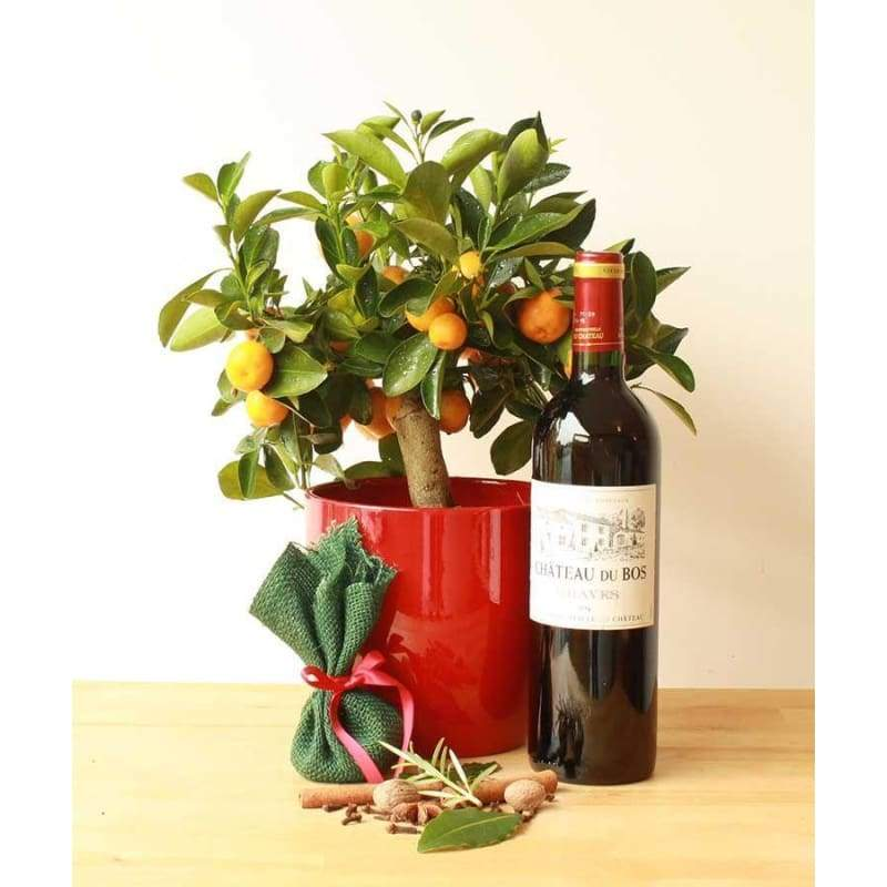 Zestive Cheer - Plant Gifts