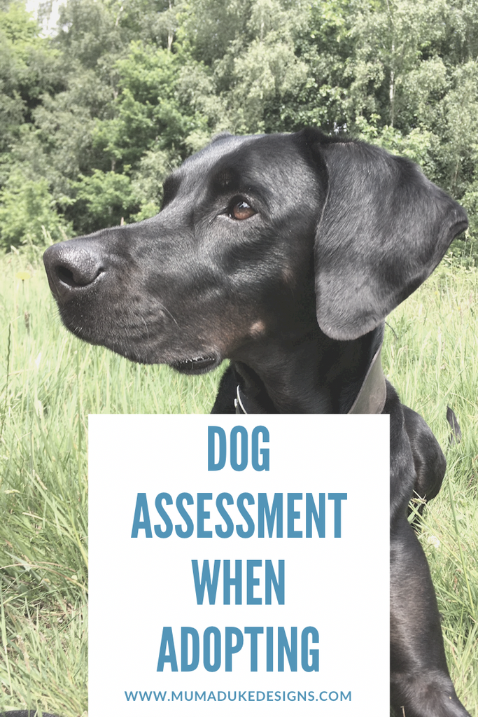 Dog Assessment