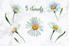 White chamomile flowers watercolor png