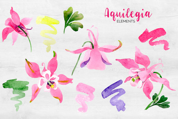 Flowers Aquilegia red, spring Watercolor png