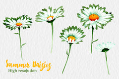 Watercolor daisy white flower png