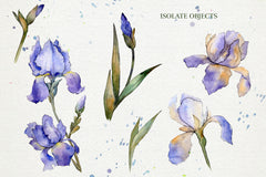 Blue irises flowers morning dawn watercolor png