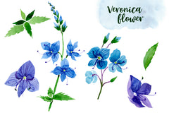 Veronica flower blue watercolor png