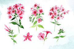 Pink phlox flower watercolor png