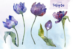 Bouquet of flowers tulips blue penny lane watercolor png
