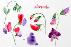 Watercolor Flowers Sweet Pea PNG