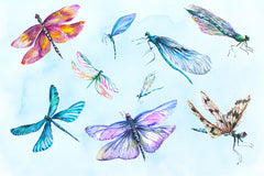 Dragonfly illustration watercolor png