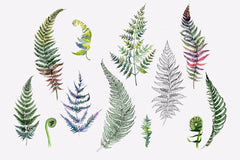 Green fern leaves watercolor png