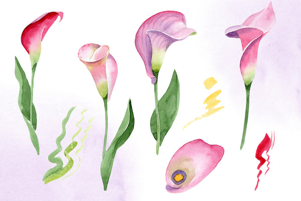 Calla lily watercolor illustrations png