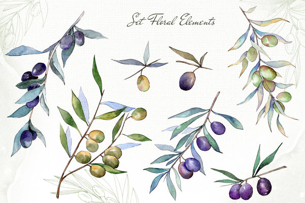 Olive branches collection  Watercolor png