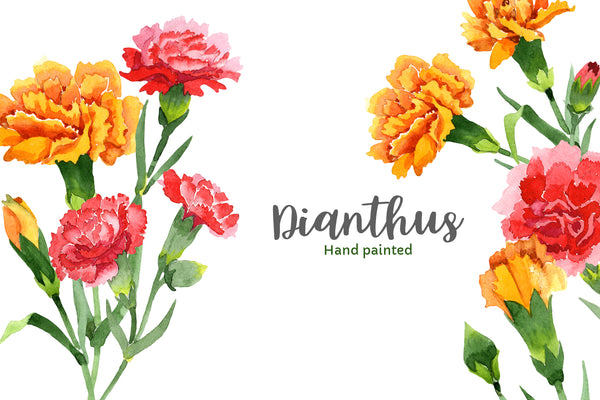 Carnation red flowers illustration watercolor png