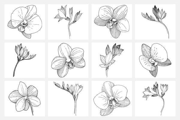 Vector illustration of Freesia flower watercolor png