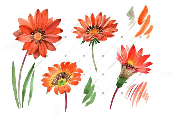 Flower Orange Gazania Png Watercolor Set