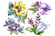 Wildflower bouquets PNG watercolor set