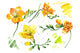 Wildflower yellow freesia PNG watercolor set