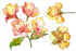 Yellow Alstroemeria Flower Png Watercolor Set Flower