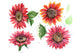 Sunflower red flower watercolor PNG set